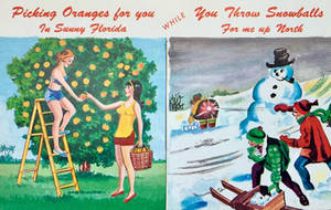 Vintage Florida - Picking Oranges For You by Yesterdays-Paper