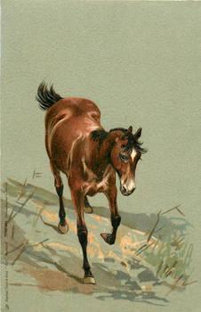 Little Brown Horse