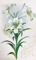 Lily Tidings by Yesterdays-Paper
