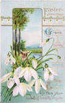 Snowdrops for Grace, Mercy, Peace
