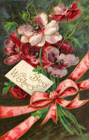 Splashy Poppies by Yesterdays-Paper