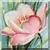 Pink Dog Rose Icon
