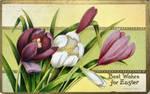 First Taste of Spring - Easter Crocuses