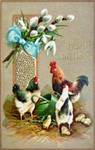 Easter Eggers and Chicks