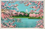 Vintage Washington DC - Cherry Blossoms Landscape