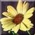 Vintage Daisy Icon 2