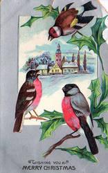 We Wish You A Merry Finch-mas!
