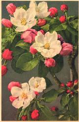 Apfelblute