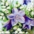 Vintage Harebell Icon by Yesterdays-Paper