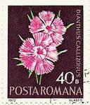 Philatelical Romania -  Pink Dianthus callizonus by Yesterdays-Paper