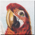 Vintage Greenwing Macaw Icon - left by Yesterdays-Paper
