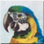 Vintage Blue and Gold Macaw Icon- left by Yesterdays-Paper