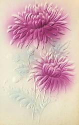 Garden Impressions - Purple Chrysanthemums