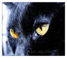 Piercing Eyes by KonikPolski