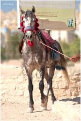 Petra Horse 1