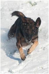 Snow Dog by KonikPolski