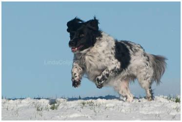 Sietse in the Snow by KonikPolski
