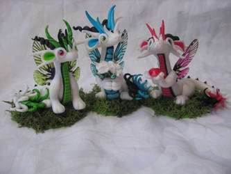 Fairy Dragons