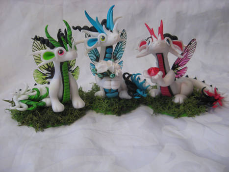 Fairy Dragons
