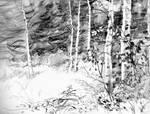Aspen Underbrush pencil sketch