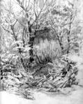 Hoar Frost on Bushes  sketch