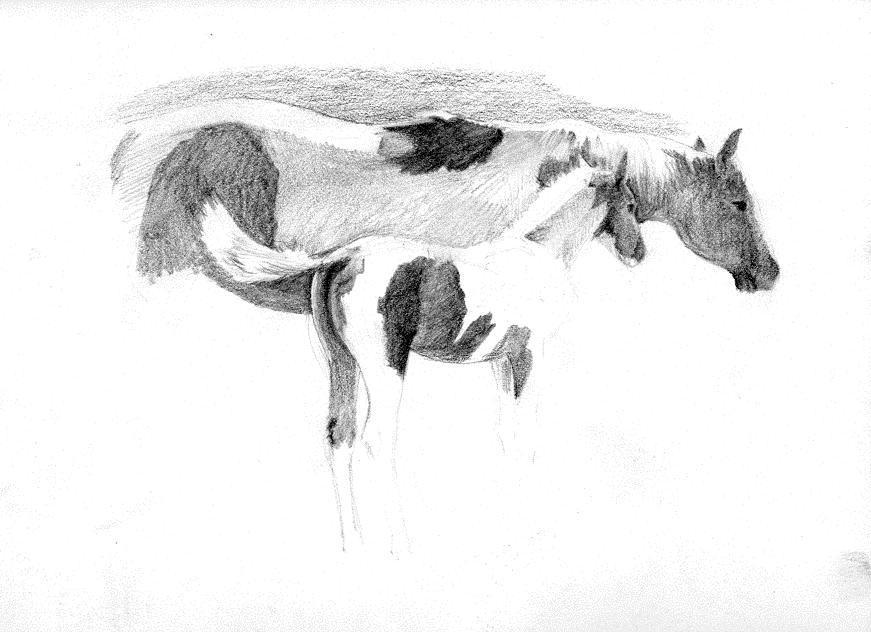 Pinto Mare Colt  sketch