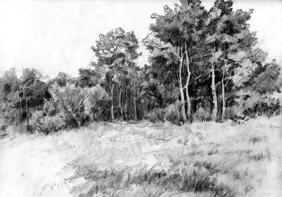Jackknife aspens pencil sketch by anubistj