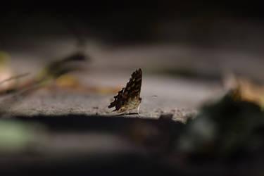 Small Flutter by GonzoShepherd