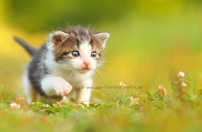 cat puppy by Partridge-PetPics