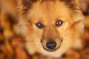 My little dog - a heartbeat to my feet by Partridge-PetPics