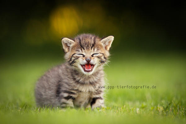 good joke! by Partridge-PetPics