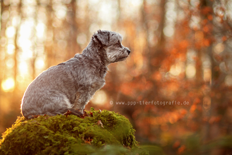 on display by Partridge-PetPics