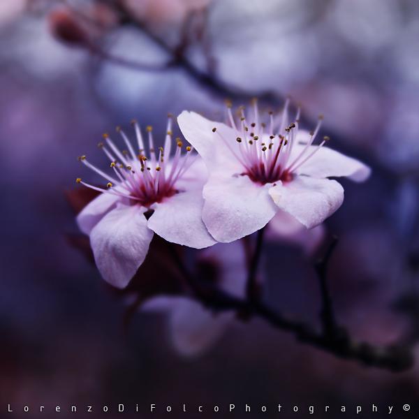 Lullaby by LorenzoDiFolco