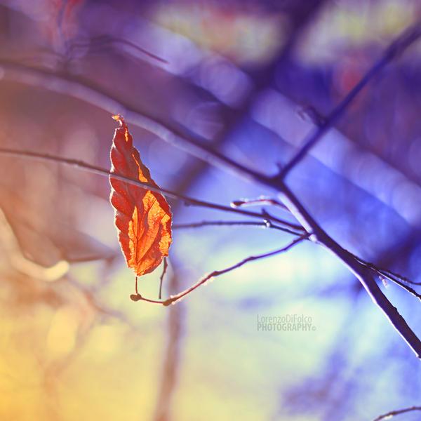 Flame by LorenzoDiFolco
