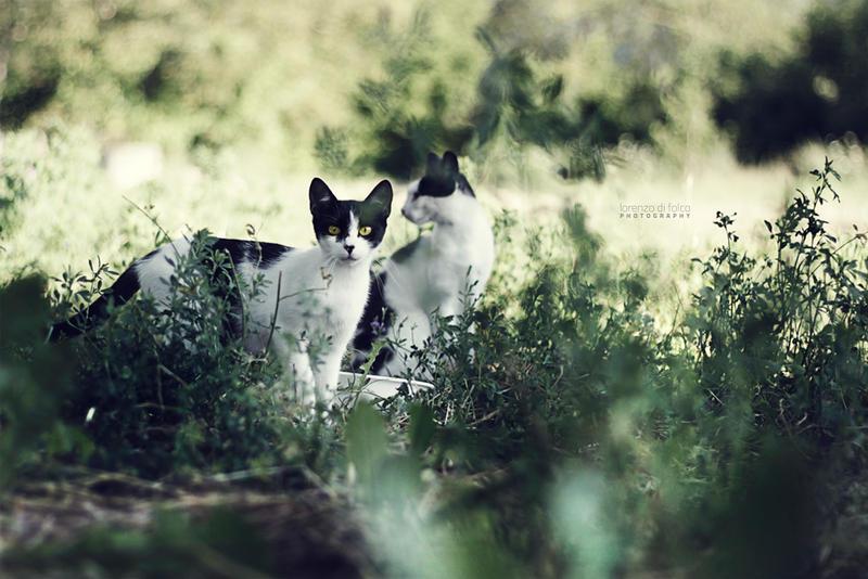 Twin by LorenzoDiFolco