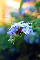 Pretty by LorenzoDiFolco