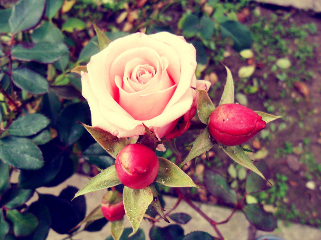 Flowers by nikolabjovanovic