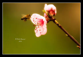 new life ii by sierkac by Nature-Club