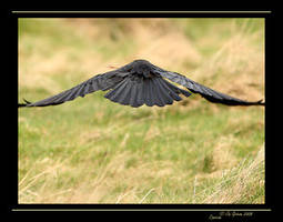 Carrion by q-118 by Nature-Club