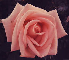 Touch of pink I by Photo-witch by Nature-Club
