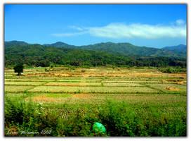 Rice Rice Rice by Lironada by Nature-Club
