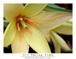 It's spring time by leocbrito by Nature-Club
