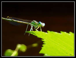 Libelle by AniMal-e by Nature-Club