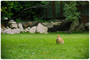 Rabbit na opushke by Penquanta by Nature-Club
