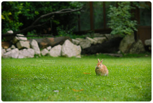 Rabbit na opushke by Penquanta by Nature-Club