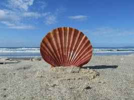 By The Seashore by SnapThat by Nature-Club