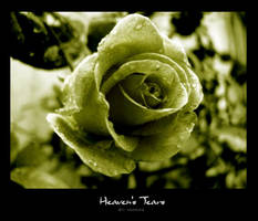Heaven's Tears by knOwme by Nature-Club
