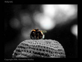 Hacky Sack by TheoneandonlyAle by Nature-Club