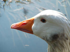 Goose: a detail by fabula-doce by Nature-Club