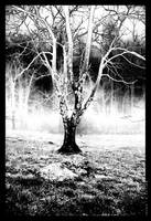 Mystic Tree by vitalityonearth by Nature-Club